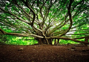 great-banyan-tree-1
