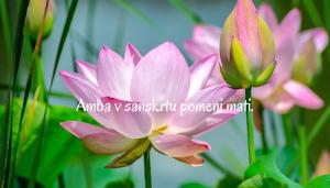 duhovna-akademija-amba_mokini-yoga